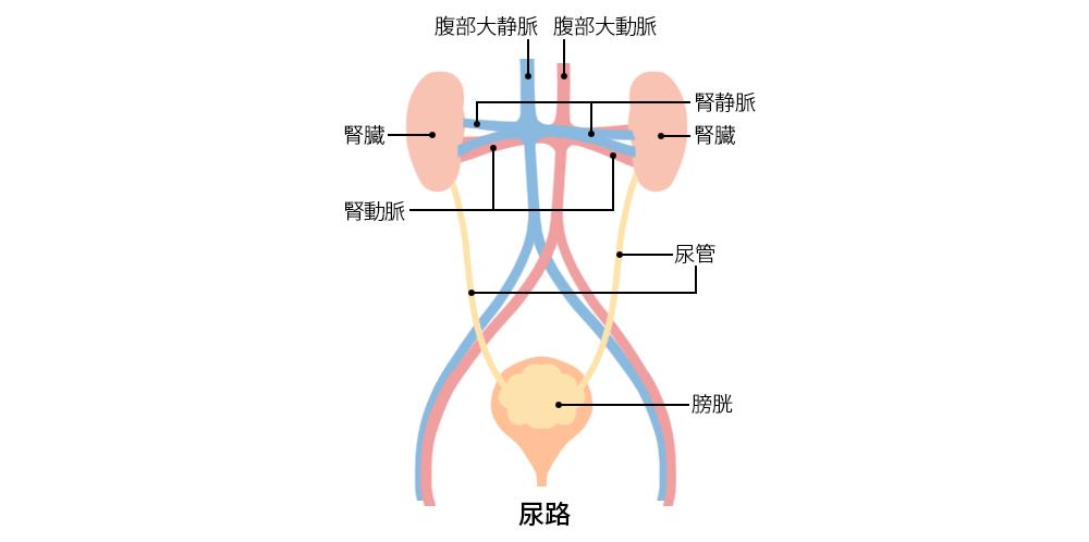 尿 路 結石 症状